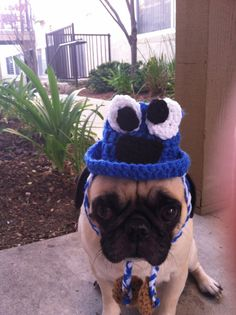 Hats for Dogs Hats For Pugs Cookie Monster Cookie by AVirtuousSin, $11.00