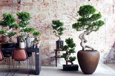 #Planten & interieur trend: Eco Luxe! http://drmh.me/1BsUWDZ a la Bonsai boom, de Ficus Ginseng