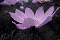 """""""La patience est une fleur qui ne pousse pas dans tous les jardins."""" #JohnHeywood"""