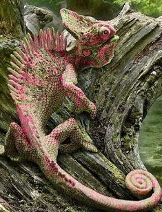 Merveilleux Coût -Gratuit Reptiles and amphibians Suggestions Les Reptiles, Cute Reptiles, Reptiles And Amphibians, Mammals, Reptiles Preschool, Beautiful Creatures, Animals Beautiful, Animals And Pets, Cute Animals