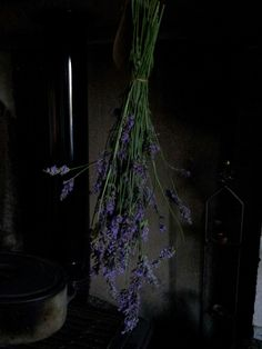 Lavender - first batch #witch #witchcraft Pagan #wicca #wiccan #hedgewitch #greenwitch #naturalwitch #cottagewitch #kitchenwitch #hippie