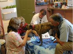 Dr. Frick treating a dog at her Veterinary Clinic in Union, Missouri