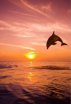 Dolphin in the Sunset this is what God made I and so happy