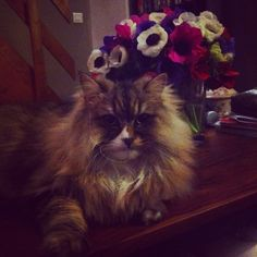 Cute cat with flowers