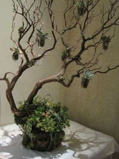 Manzanita Tree and Succulents - Françoise Weeks Manzanita Wedding, Manzanita Tree Centerpieces, Manzanita Branches, Tree Branches, Succulent Images, Succulent Tree, Branch Decor, Dried Flowers, Banquet