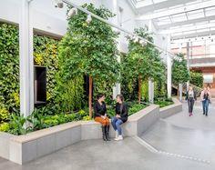 Vertical Gardens. Karolinska Institute Future Learning Environments in Sweden, designed by Tengbom. Photography by Sten Jansin.