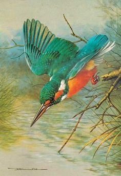 Basil Ede Bird Pencil Drawing, Bird Drawings, Animal Drawings, Watercolor Bird, Watercolor Artwork, Black Pen Sketches, Pencil Drawing Inspiration, Kingfisher Bird, Bird Artwork