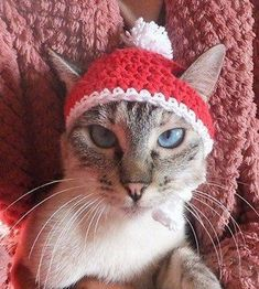 Items similar to Christmas cat hat on Etsy Crochet Cat Toys, Knitted Hats, Crochet Hats, Cat Hat, Cat Supplies, Christmas Cats, Cat Love, Fur Babies, Knitting