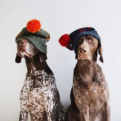 dogs in hats!