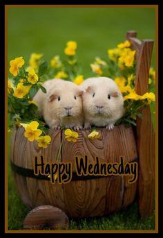 97 Best Happy Wednesday Images In 2019 Happy Wednesday