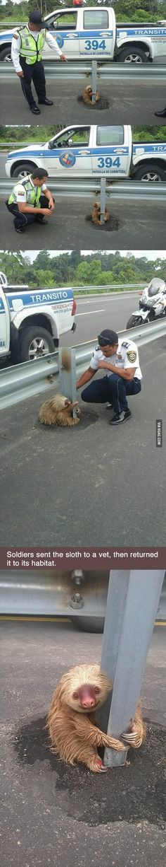 Little sloth tries to cross the highway in Ecuador, gets scared, can\'t move