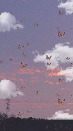 Sfondo farfalle