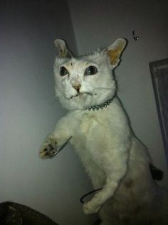 30 Bad Taxidermy Pictures That Are Equal Parts Terrifying And Hilarious