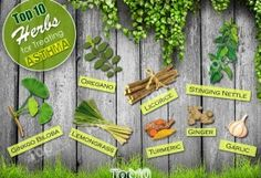 Top 10 Herbs for Treating Asthma