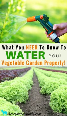 Gardening Tips, Garden Soil, What You NEED To Know To Water Your Vegetable Garden Properly, Watering Vegetable Garden, How To Water a Garden #vegetablegardening