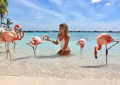 @Renaruba Aruba Flamingos have been living in Aruba for years. Approximately 15 years ago flamingos made their home on the Renaissance Private Island living on the beach and mingling with visitors. Guests of the Renaissance Aruba Resort have free access to the island but you can buy a day pass for $100 and visit the island as a non-guest.  Yaklaşık 15 yıl önce flamingolar Renaissance Private Islandı evleri haline getirdiler. Burada deniz kenarında gelen misafirler ile birlikte yaşamlarına… Aruba Flamingos, Aruba Resorts, Birdwatching, 15 Years, Renaissance, Happiness, Island, Lifestyle, Beach