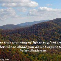 The true meaning of life is to plant trees, under whose shade you do not expect to sit. - Nelson Henderson