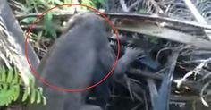 Workers Thought They Found An Alien Creature, But The Truth Is Heartbreaking
