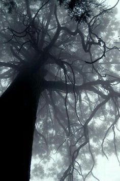 ♠TREES SPEAK IN RIDDLES, & DANCE IN TIME.. THAT A WALK &  LOSS SOMETIME..
