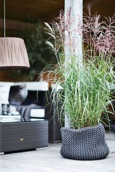 Indret i stram og moderne stil Dream Garden, Home And Garden, Deco Floral, Garden Architecture, Ornamental Grasses, Tall Grasses, Blog Deco, Plant Holders, Garden Pots