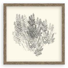 Framed Print - Coral | west elm