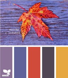 Autumn infused- colors for my dining room?