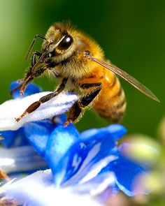 Bee Portrait! by Danny Perez