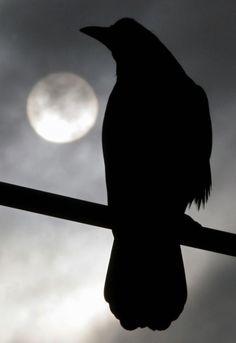 Raven in Moonlight http://www.pinterest.com/pin/192951165255797637/ http://www.pinterest.com/pin/192951165260455395/