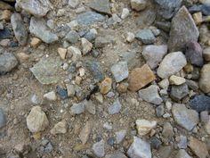 Where is the Ant? - Granite Island - South Australia