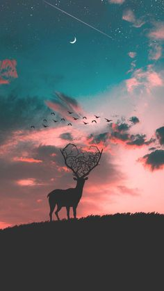 Deer Sunset Silhouette iPhone Wallpaper - iPhone Wallpapers