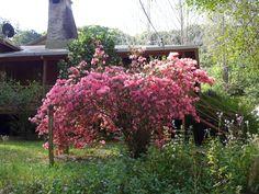 Flowering Shrubs, Bloom, Plants, Pink, Photography, Flowering Bushes, Photograph, Fotografie, Photoshoot