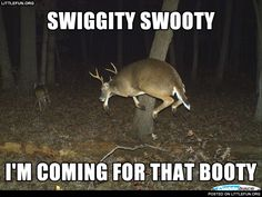 Swiggity swooty i'm coming for that booty. Deer.
