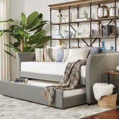 Three Posts Burlington Daybed with Trundle Color: Grey