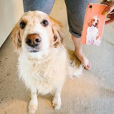 Get YOUR pet hand-drawn & UV printed on a transparent OR colored Eco-friendly phone case now. Animal Phone Cases, Dog Phone, Auntie, Dog Owners, Pet Portraits, Dog Life, Your Pet, Pup, How To Draw Hands