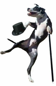 Photoshop dogs