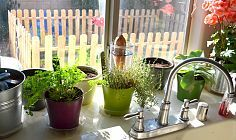 Hometalk :: Gardening/curb appeal :: Terri J's clipboard on Hometalk