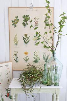 Vignette with botanical charts, green bottles and a plants by Vibeke Design Graphisches Design, Layout Design, Design Ideas, Wall Design, Design Trends, Vintage Room, Vintage Home Decor, Vintage Style, Bedroom Vintage