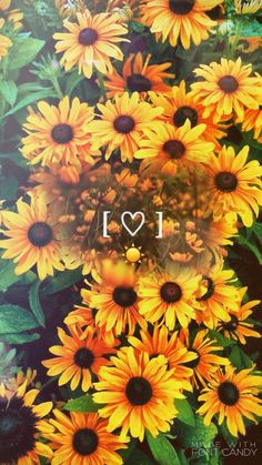 ☀ sun is shining and so are you ❤ aesthetics ❤ ayçiçekleri, Tumblr Backgrounds, Cute Wallpaper Backgrounds, Tumblr Wallpaper, Pretty Wallpapers, Aesthetic Iphone Wallpaper, Aesthetic Wallpapers, Wallpaper Wallpapers, Aesthetic Backgrounds, Phone Backgrounds