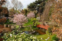 Musée_Albert_Kahn_-_Jardin_japonais_-_Cerisiers_et_Magnolias_en_fleurs.jpg (Imagen JPEG, 5184 × 3456 píxeles)