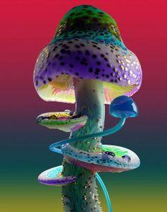 Rare Mushrooms : Jonathan Zawada Wild Mushrooms, Stuffed Mushrooms, Mushroom Wallpaper, Mushroom Pictures, Mushroom Art, Hippie Art, Patterns In Nature, Art Reference Poses, Nature Animals