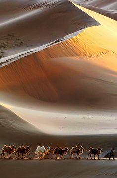 Караван в пустыне Гоби