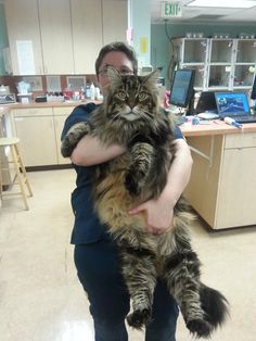 Here we have Hans taking his TST Troll Security Service Norwegian Forest Cat in for a check up with the Veterinary.  They just collected a blood sample from the ringlefinch troll, a bergtroll that lives under a bridge.