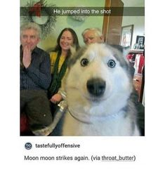 29 Dogs Who Are Photobombing Jerks - Cheezburger - Cat memes, funny animals, and cute dogs. Funny Dog Memes, Funny Animal Memes, Funny Animal Pictures, Cute Funny Animals, Cute Baby Animals, Funny Cute, Funny Dogs, Silly Dogs, Funny Pranks