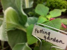"""Petting garden"" for kids - soft, fuzzy plants that will hold up for kids to touch."