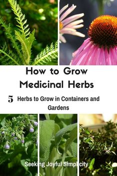 Creating a medicinal herb garden doesn't have to be complicated or overwhelming. Start with just a few herbs - these 5 herbs are all easy to grow, offer you a variety of benefits, and have a long history of healing benefits