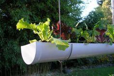 http://www.homejelly.com/wp-content/uploads/2011/04/gutter-garden-repurpose-your-trash.jpg