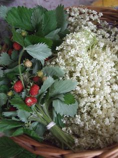 Strawberries and elder flowers © Dragomyra