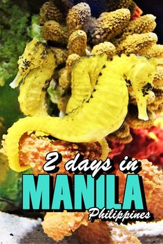 "Exploring Manila, the capital of the Philippines in 2 days. See what you can see and do in the ""Pearl of the Orient"" in only two days"