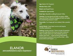 Today's l'il leprechaun rescue is Elanor! #jackrussell #rescue #sponsor