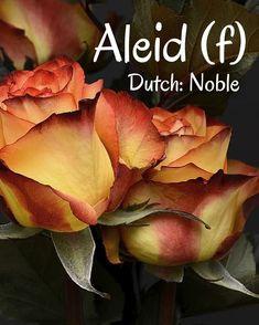 Dutch Names, Flowers, Plants, Plant, Royal Icing Flowers, Flower, Florals, Floral, Planets
